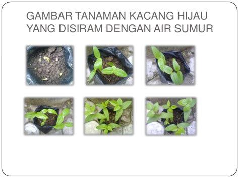 biologipenelitian pengaruh pertumbuhan kacang hijau oleh