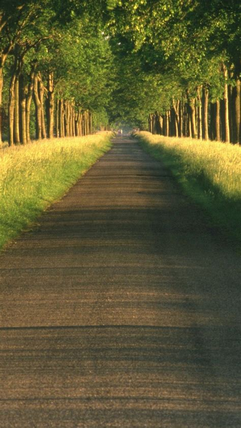 wallpaper iphone 6 road tree road iphone 6s wallpapers hd