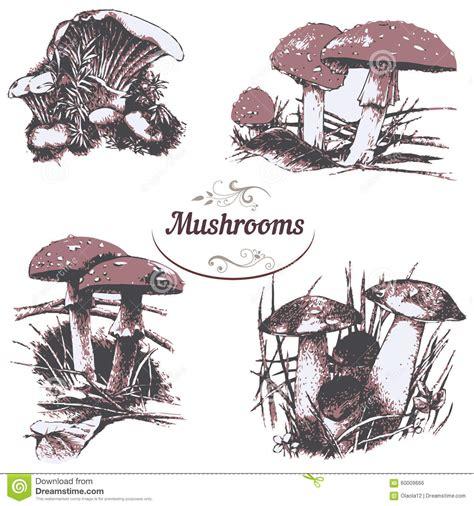 set  drawings mushrooms stock vector illustration