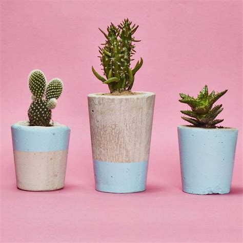 cactus planter light blue concrete plant pot with cactus or succulent by hi cacti notonthehighstreet com