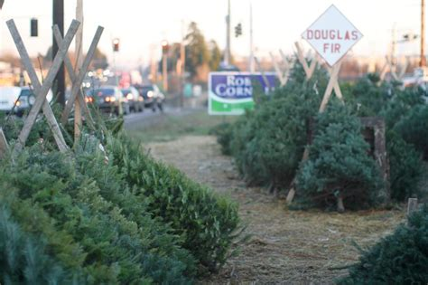 real xmas trees for sale newcastle real vs trees which is better for the environment habitat network
