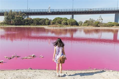 pink lake melbourne pink lake k is for kani