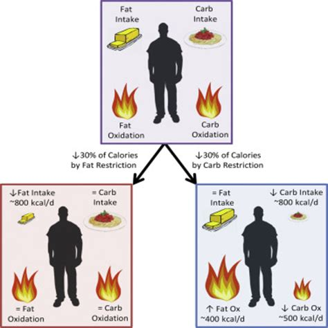 carbohydrates versus calories calorie for calorie dietary restriction results in