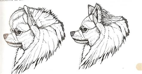 german spitz x pomeranian mini amores