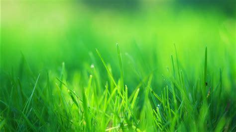 green grass field wallpapers hd wallpapers id