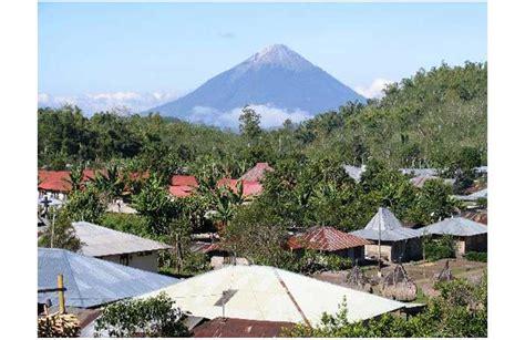 Tembakau Shag Cangklong Nikmat Harum kopi bajawa lebih dikenal di luar negri