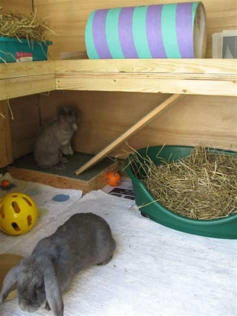 Do Rabbits Shed by 25 Best Images About Rabbit Shed On Cages For