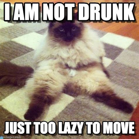 Lazy Day Meme - lazy cat still cute lazy cat i am not drunk just too