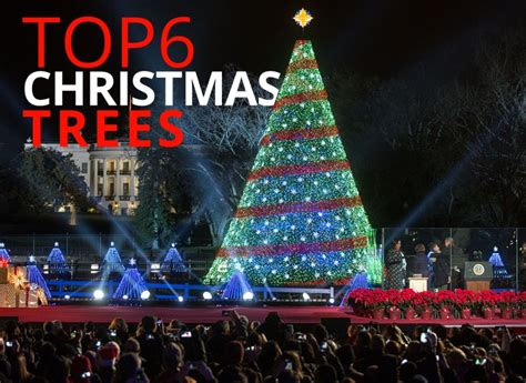 real christmas trees liverpool top 6 trees by the best you the best you magazine
