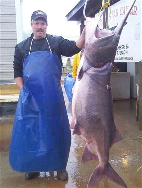Dakota Records International Fishing News Usa Story Of The Paddlefish Of Last Decade