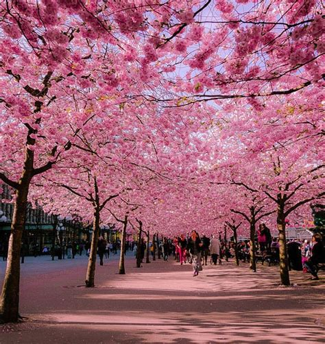 Noren Tirai Jepang Motif Puppy N Pink 30 extraordinary pictures that will your mind youramazingplaces