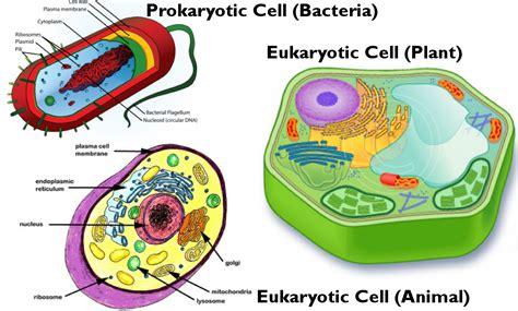 diagram of an eukaryotic cell prokaryotic vs eukaryotic cells