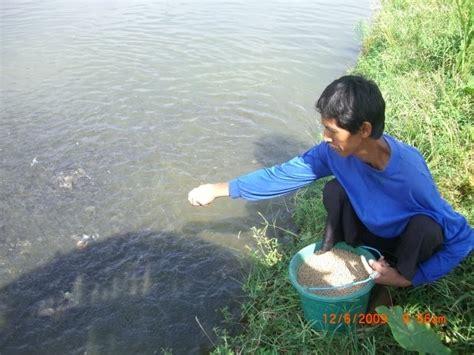 Harga Bibit Ikan Bawal Di Bogor bibit ikan jual bibit ikan bawal dan gurami tempat bogor