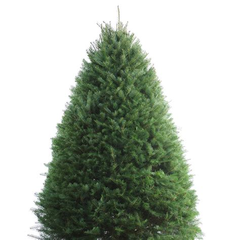 shop 8 9 ft fresh douglas fir christmas tree at lowes com