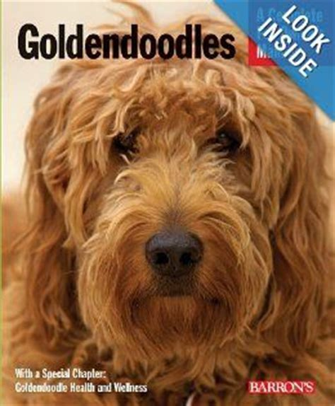 goldendoodle puppy book 130 best images about golden doodle grooming styles on
