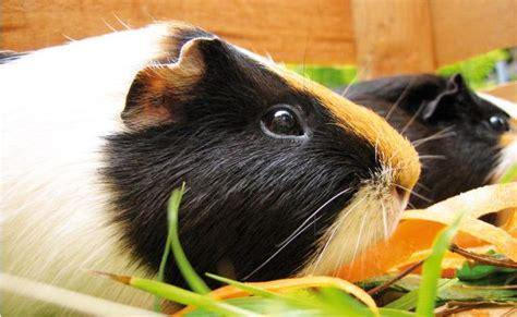 alimentazione per conigli roditori alimentazione
