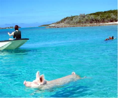 Nick Vacation In The Bahamas by 140 Best Images About The Bahamas My Home On