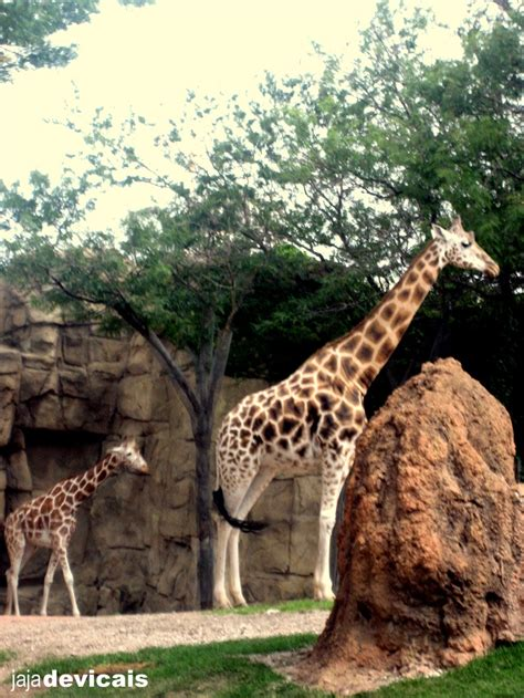 lincoln park zoo entry fee image gallery lincoln park zoo visit