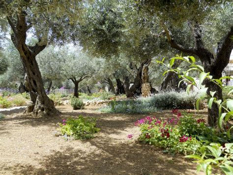 Garden Of Gethsemane Images by Gethsemane Quotes Like Success