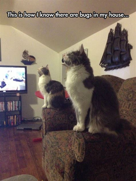 cat staring at couch morning jokes 20 pics