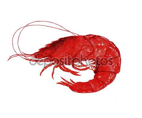 shrimp clip shrimp clipart clipground