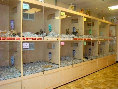 pet shop puppies boston bans pet shops from using puppy mills