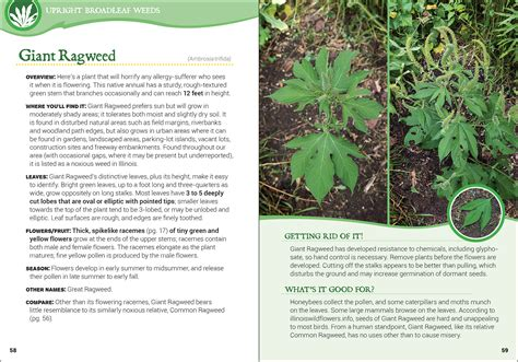 Backyard Identification by Common Backyard Weeds Of The Midwest