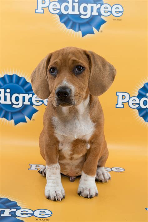 7 Reasons To Animal Planet by Seven Reasons To The Puppy Bowl Other Sports