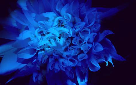 black and blue colors 31 cool wallpaper hdblackwallpaper