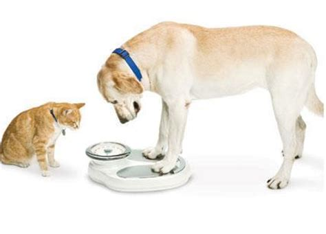 weight management in dogs heritage animal hospital july is pet weight management