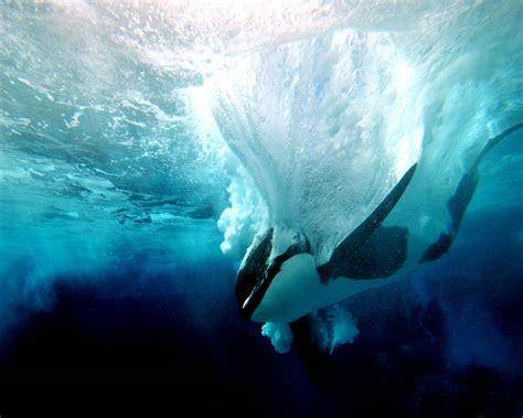 fotos animales fondo de pantalla animales marinos hd taringa