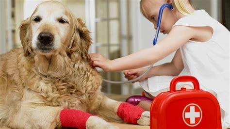 las mascotas al dedillo 849825759x como ense 241 ar a los ni 241 os a cuidar de sus mascotas