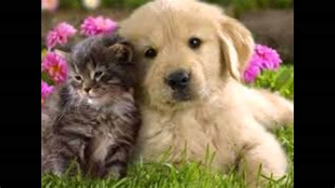 puppies cuddling puppy and kitten cuddling www pixshark images galleries with a bite