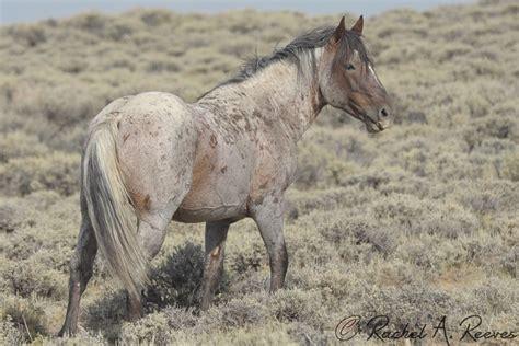 wild horse behavior rachel reeves photography