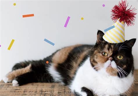 cat birthday pudge birthday hat cat cats in hats