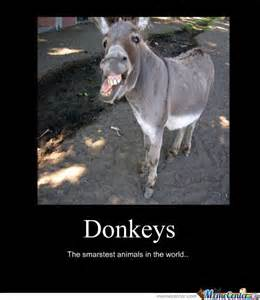 Most Hilarious Memes - 35 most funniest donkey meme pictures and photos