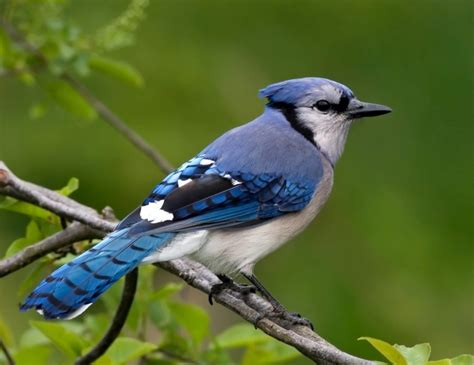 Birds Top top 10 most beautiful birds in the world