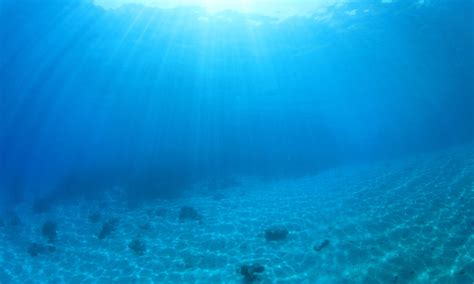 Sea Floor by Bottom Photos Wwf