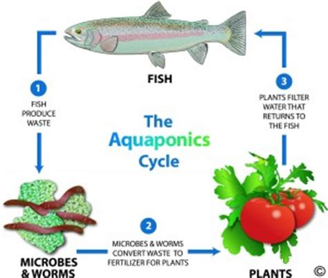 What Is The Meaning Of Backyard by What Is Aquaponics