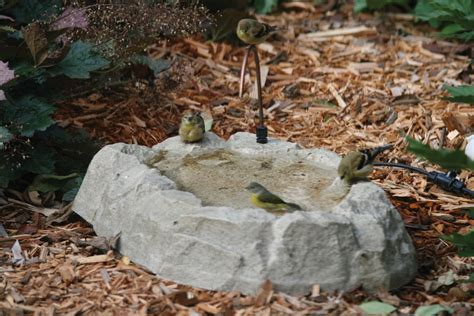 birds choice rocky mountain ground bird bath with dripper