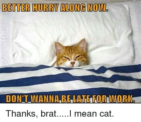 Mean Cat Memes - 25 best memes about mean cat mean cat memes