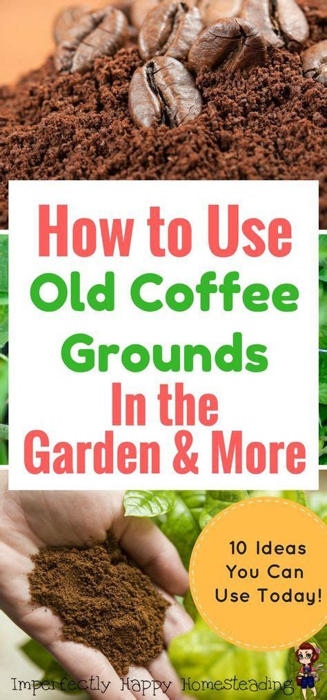 Using Coffee Grounds In Garden by 25 Best Ideas About Used Coffee Grounds On