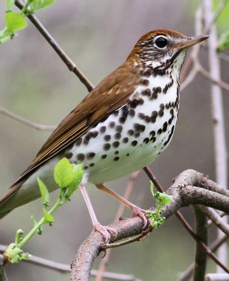 five bird species your grandchildren may never see but