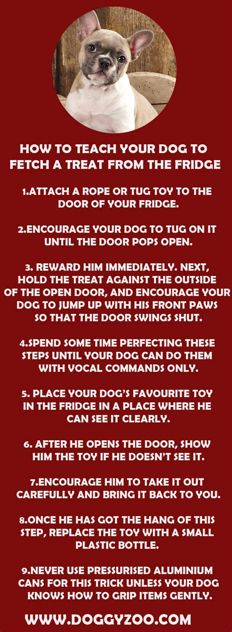 how to your to fetch a how to teach your to fetch a treat from the fridge doggyzoo comdoggyzoo