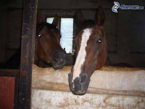 pferde stall pferde
