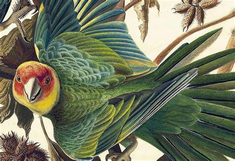 win a copy of the gorgeous book audubon s aviary audubon