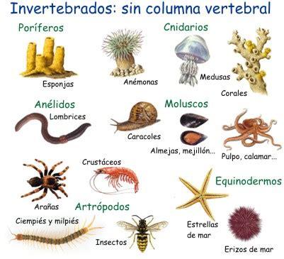 imagenes animales invertebrados invertebrados animales sin columna vertebral la misi 243 n azul