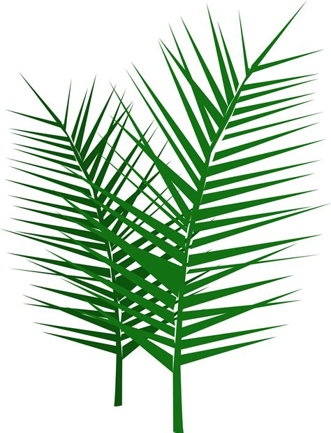 palm branch image clipart best
