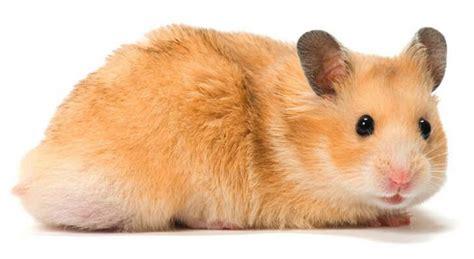 Small Animals Type C small animals