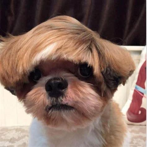 imagenes animales con pelo fotos de los cortes de pelo de mascotas m 225 s sorprendentes